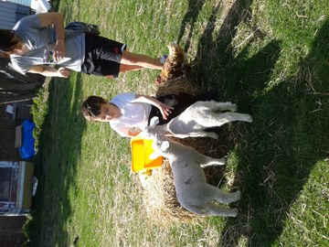 Thanks to Emma Evans for letting Ryan feed her lambs!