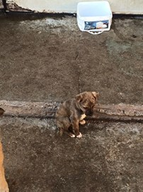 Help us to stop pups being born unwanted