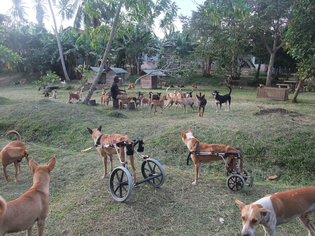 Give a Dog a Cart! - JustGiving