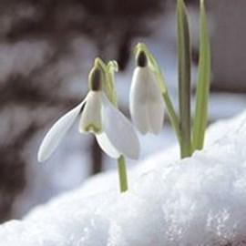 Snowdrop Living Fund