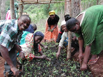 transplanting tree seedlings