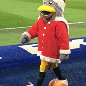 Seagull Santa getting involved!