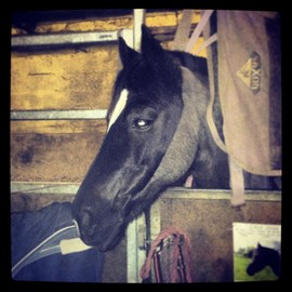 Merlin my gorgeous but always ill horse!