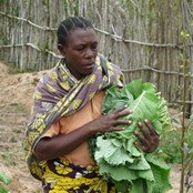 Farming God's Way ensures that farmers are less vulnerable to crop failure.