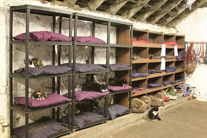 Willows Cat Hotel