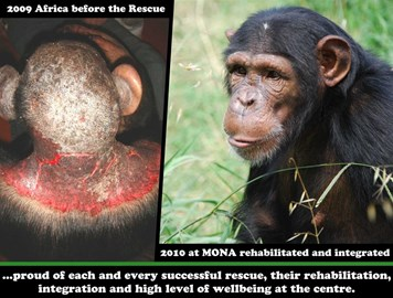 Young female Africa before and after her rescue