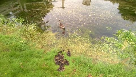 Test ducklings