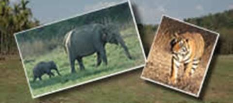 Elephants/forest:WLT, tiger:Maria Allen