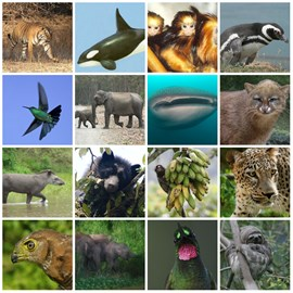 Just SOME of the species that World Land Trust are working to protect