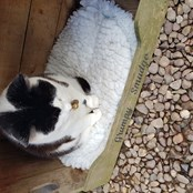 Titch who is blind and a sponsor cat for £12 per annum - Villager