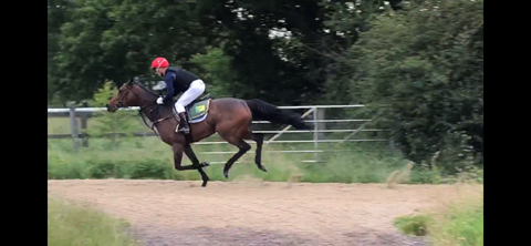 On the gallops