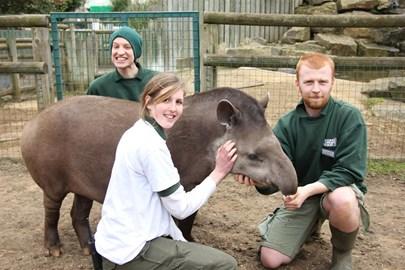 Team Tapir