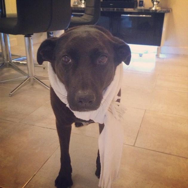 Birmingham Dogs Home Donations