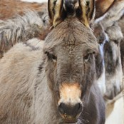 Lottie was an unlicensed beach donkey forced to give rides all day to holiday makers.