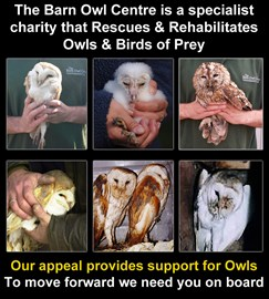 Being there to offer a rescue & rehabilitation service is so important to the birds