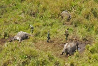 Poached elephants found in Garamba National Park, May 2014 © APN/ICCN