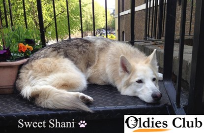 Shani, enjoying some fresh air at her foster home