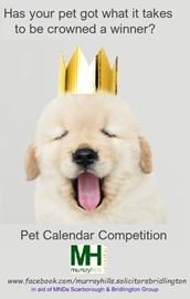 Pet Calendar Competition