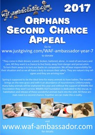 Second Chance Appeal