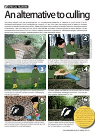 Badger vaccination - How it works