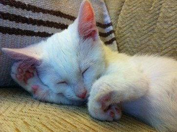 Harvey - sleepy time