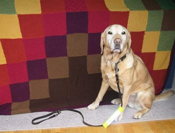 Retired guide dog Glen showing that the Bog Knit blanket appeals to young and old alike!