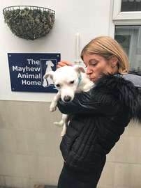 Usher the dog - he was abandoned and left to fend for himself in a London park. The Mayhew rescued him and are now caring for him whilst he waits to find a new forever home